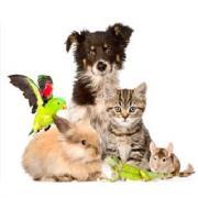Guerison et communication animale