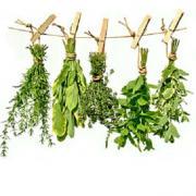 Herbes etheriques