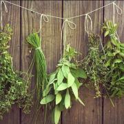 Herbes plantes etheriques 2