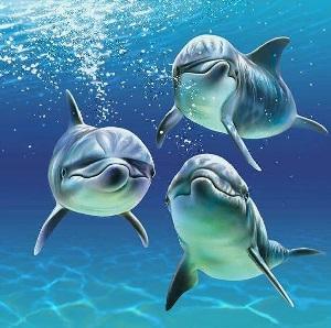 Reiki des dauphins